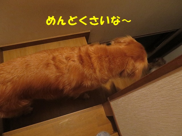 IMG_6165.jpg