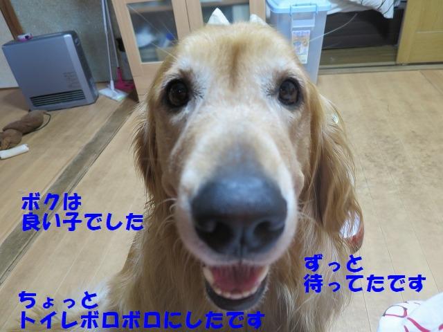 IMG_6217_1.jpg