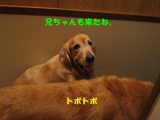 IMG_6315.jpg