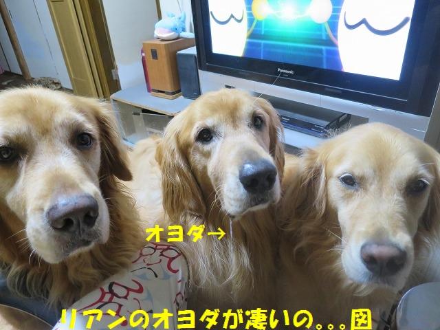 IMG_6339.jpg