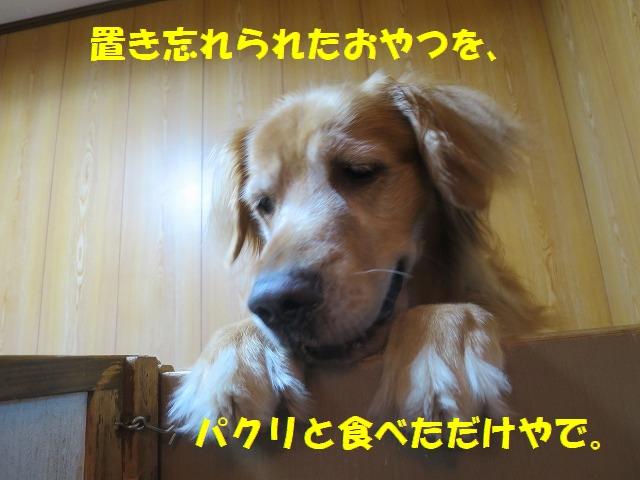 IMG_6355.jpg