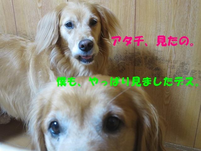 IMG_6360a.jpg