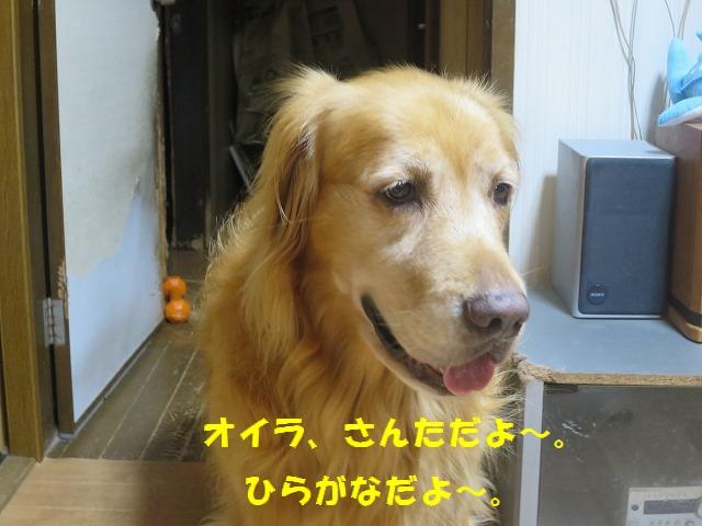 IMG_6413.jpg