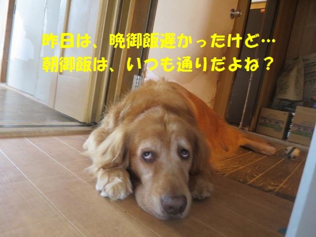 IMG_6541.jpg