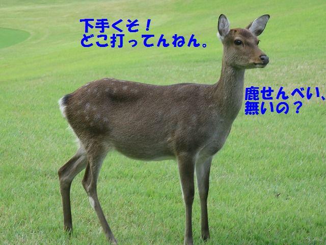 IMG_6846.jpg