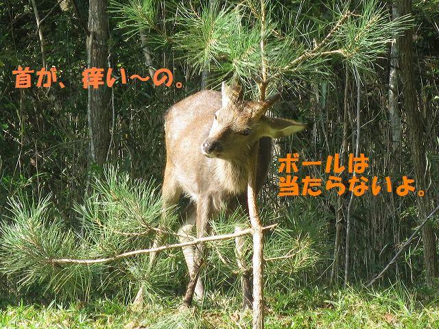 IMG_6869.jpg