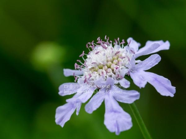 箱根湿生花園 C