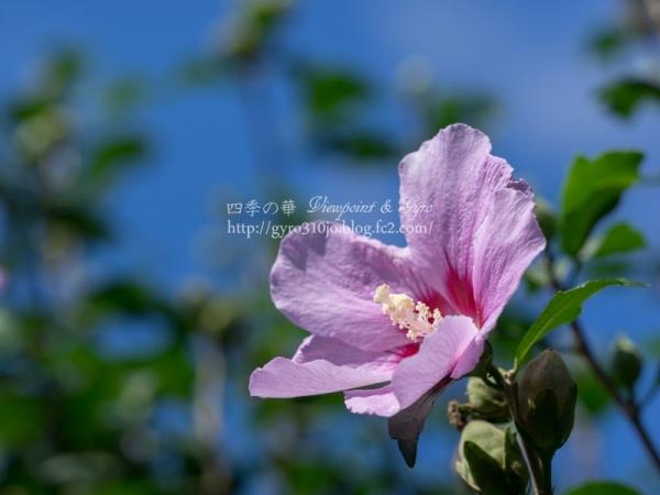 秋の花 E