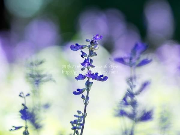秋の花 A