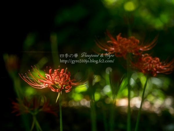 秋の花 F