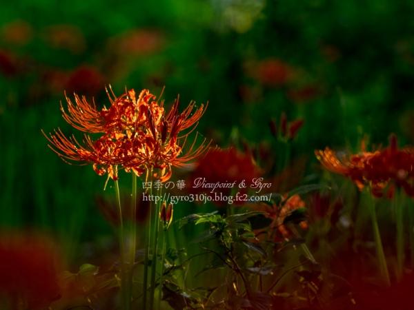秋の花 I