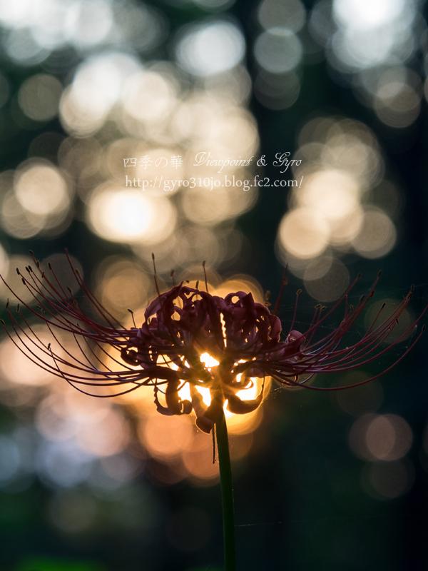 秋の花 J