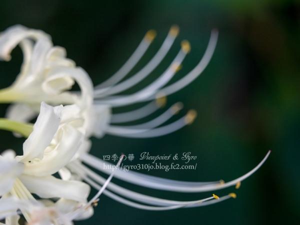 秋の花 H
