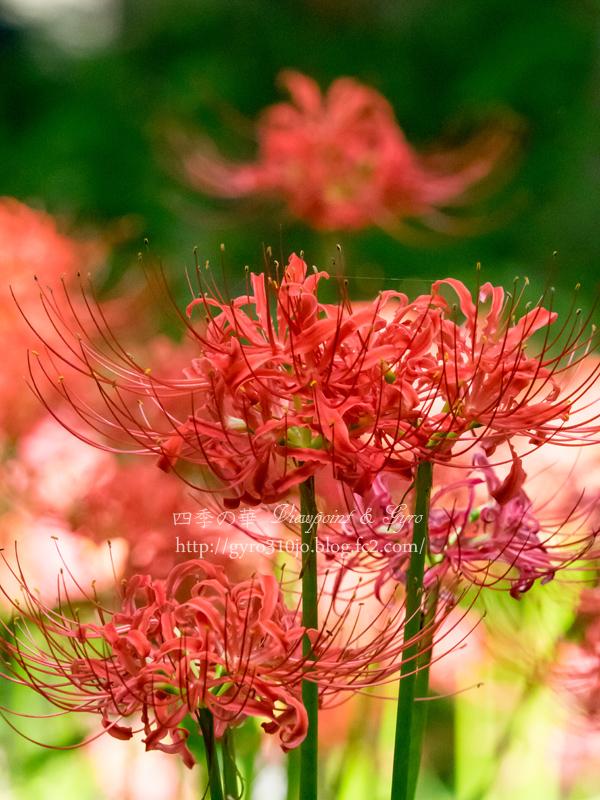 秋の花 B