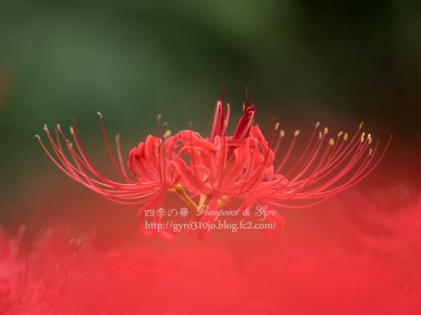 秋の花 C