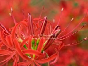 秋の花 D