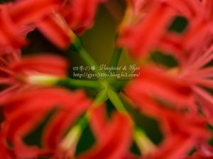 秋の花 G