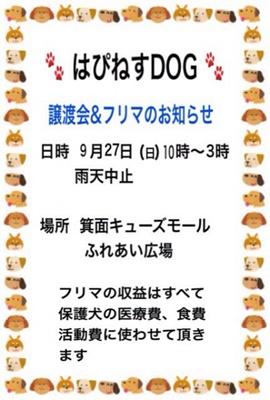 IMG_4620-2-405x600.jpg