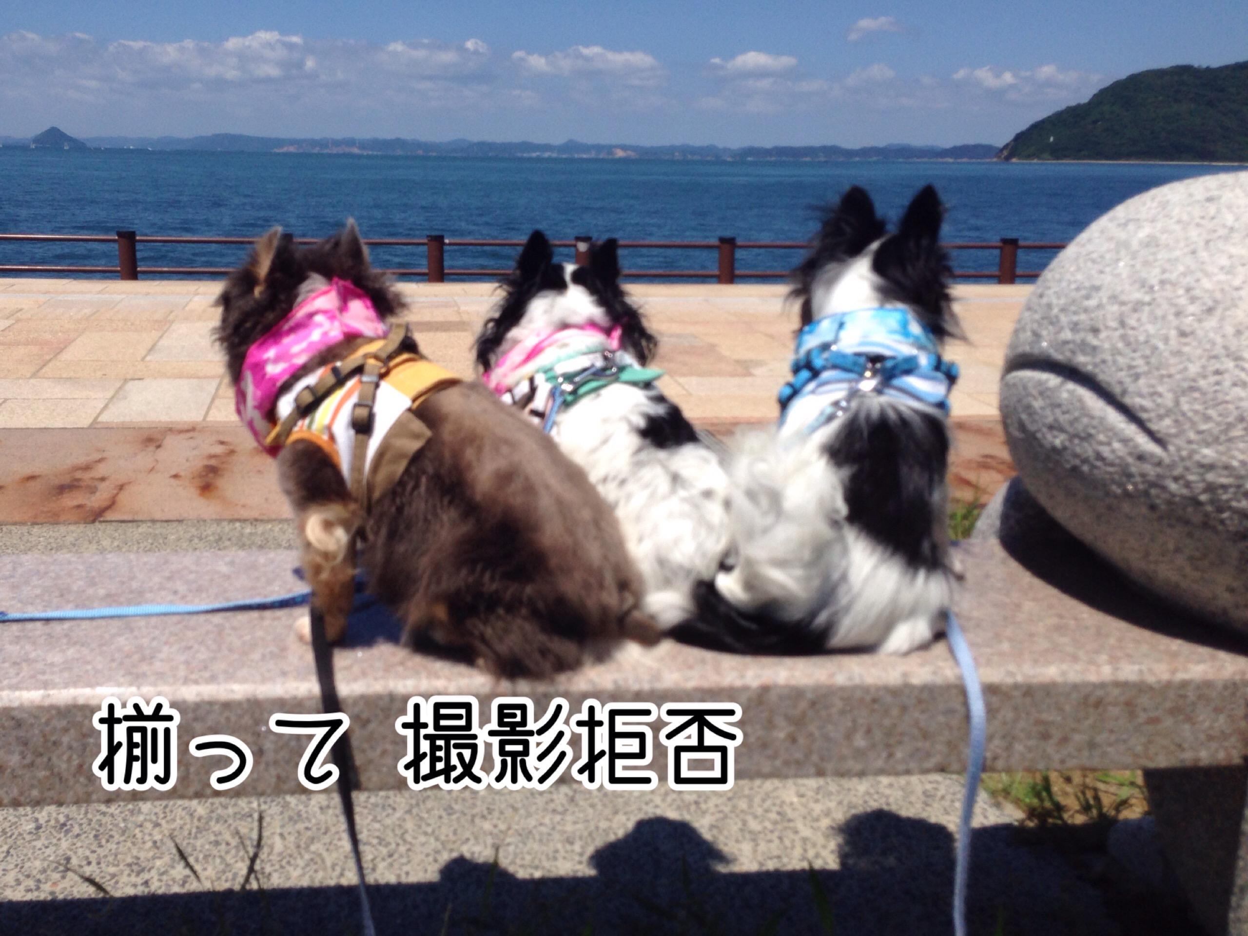 IMG_6612.jpg