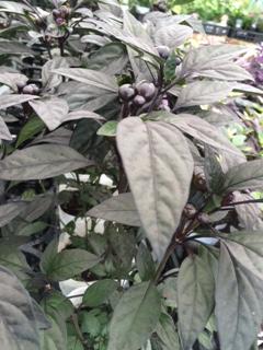 秋の花15-2