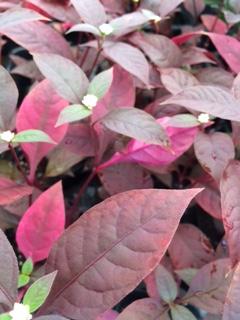 秋の花15-5