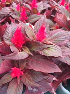 秋の花15-6