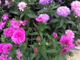 秋の花15-1