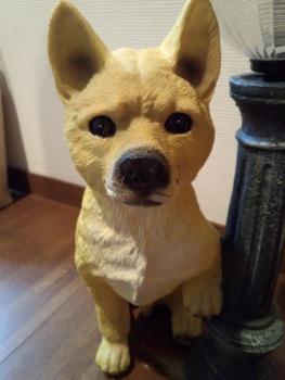 20150821柴犬