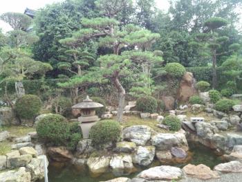 20150824庭木