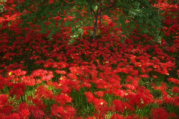 紅い絨毯・・・本当にそう思ったなァ・・・゙