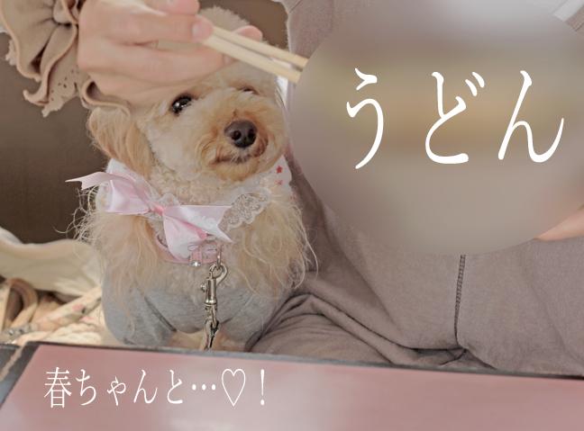 IMG_8994香川うどん1
