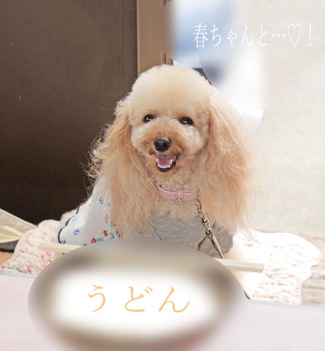 IMG_8992香川うどん1