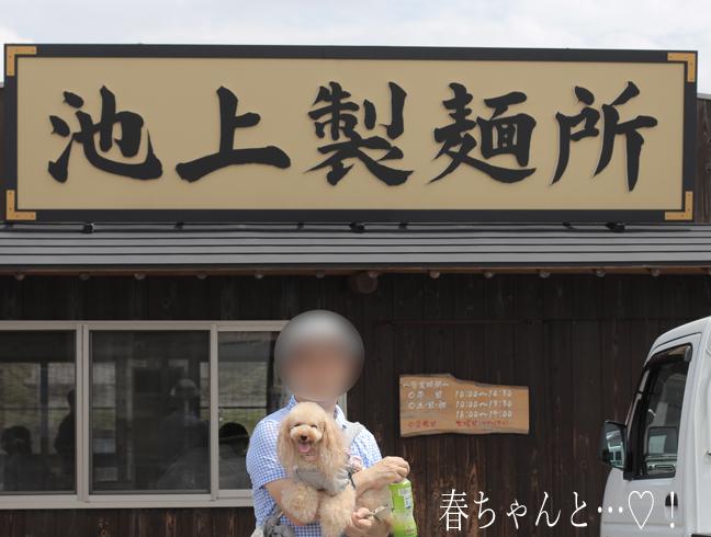 IMG_8999香川うどん