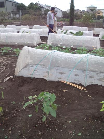 農園0927