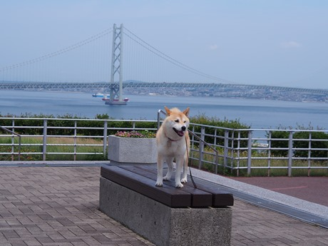 うしろに明石海峡大橋