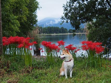 琵琶湖畔♪