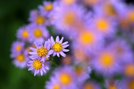 癒しの花園