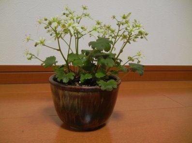 松渓山窯の鉢・アップ