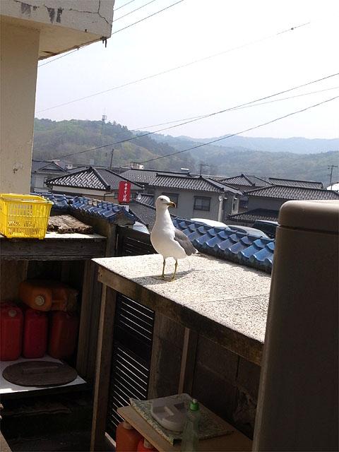 150501琴平荘-カモメ