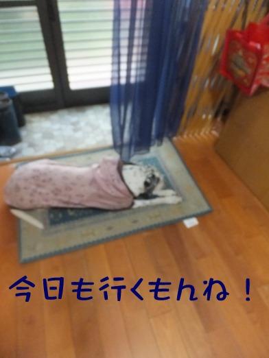 2015_1004_091324.jpg