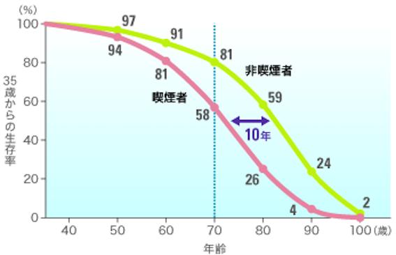 喫煙の生存曲線に及ぼす影響