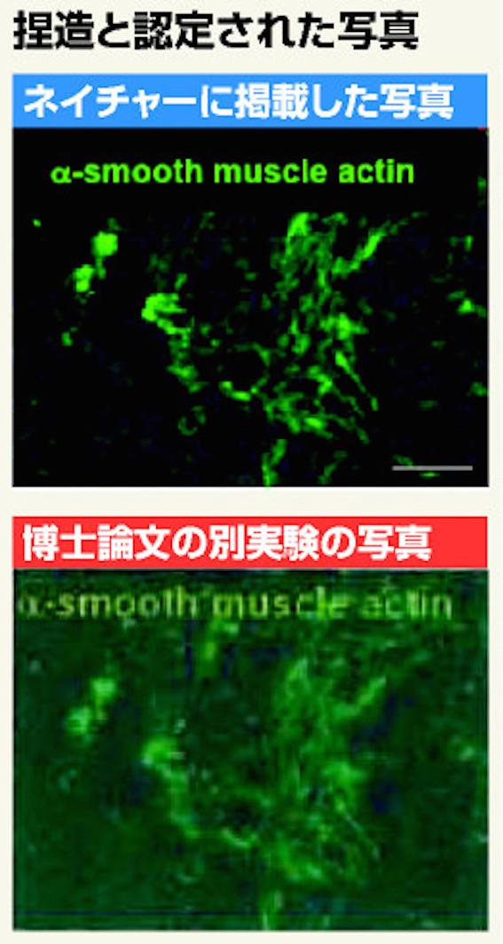 STAP細胞で改ざんされた写真