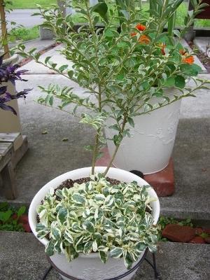 2種植え2