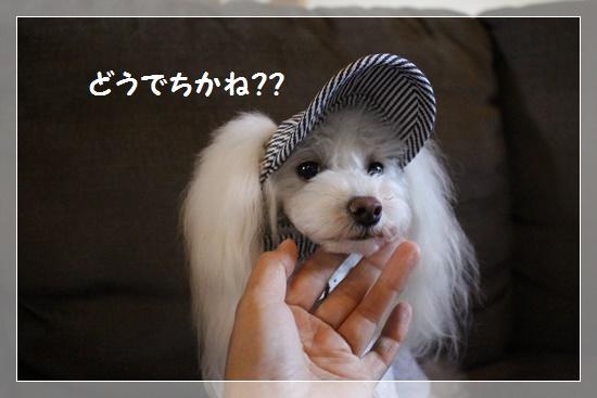 お帽子どうでちか