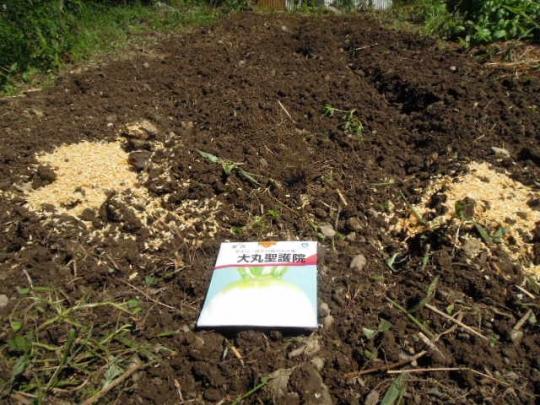 聖護院大根大根の種蒔き H2708