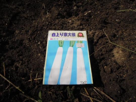 201509 白上り京大根