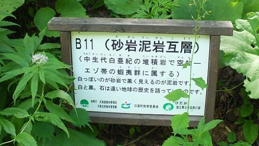 日高町 渓谷 (5)