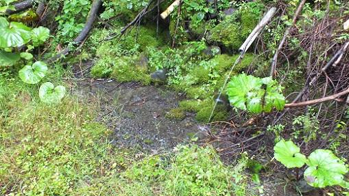 ヌプントムラウシ温泉水 (1)
