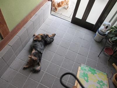 一人玄関で踊りだすみゆりん