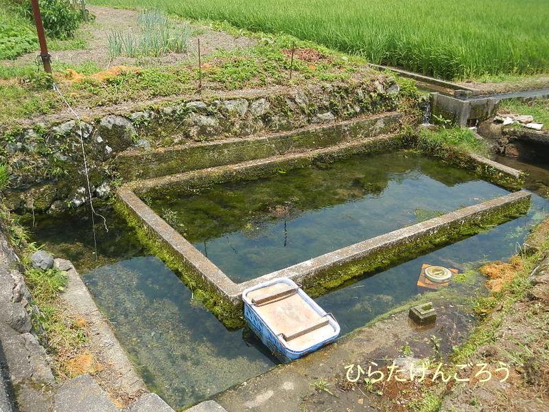 spring water①